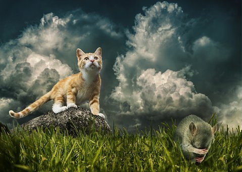 Cat, Mouse, Prey, Hunting, Live, Death, Fear, Despair