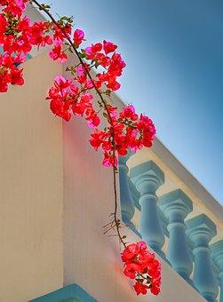 Flower, Plant, Ornament, Nature, Greece, Karpathos