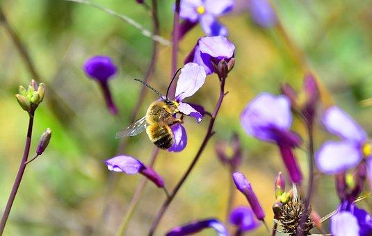Flower, Nature, Plant, Anthophila
