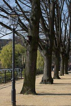 Promenade, Tree, Wood, Lantern, Schinkel, Nature