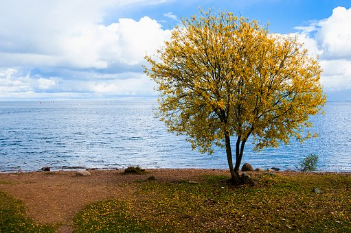 Nature, Landscape, Tree, Outdoors, Sky, Nutlet, Ladoga