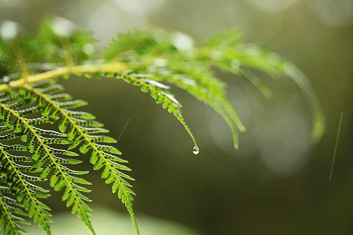 Leaf, Nature, Flora, Closeup, Fern, Desktop, Outdoors