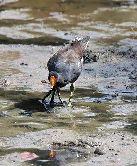 Bird, Water, Wildlife, Animal, Nature, Outdoors, Wild