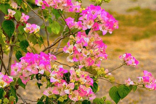 Fueng Fah, Paper Flower, Flowers, Pink, The Landscape