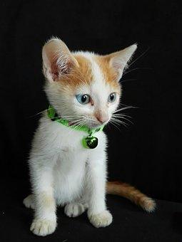 Nice, Pet, Cat, Animalia, Small, Kitten, Domestic