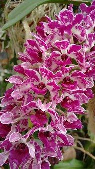 Plant, Nature, Flower, Flowers, Garden, Orchid