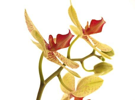 Flower, Nature, Tropical, Plant, Romance, Bright