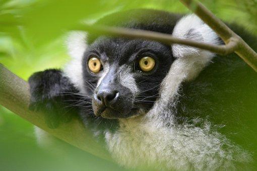 Nature, Animal World, Primate, Animal