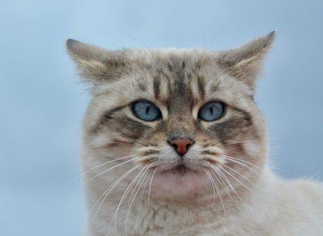 Cat, Pussy Nala, Portrait Cat, Domestic Animal