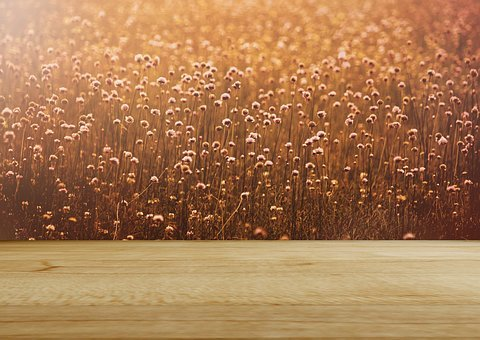 Background Image, Flower Meadow, Rustic, Wood, Romantic