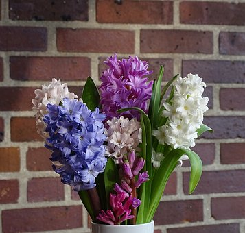 Bouquet Of Flowers, Hyacinth, Spring, Flower
