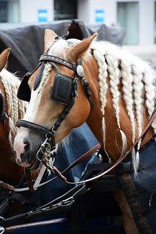 Cavalry, Horse, Animal, Transportation