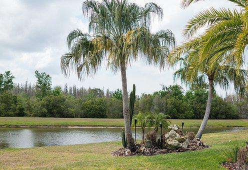 Florida, Landscape, Palm Trees, Pond, Palm, Tree, Water