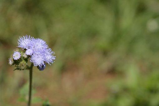 Nature, Wild, Wildflower, Flora, Flower, Summer