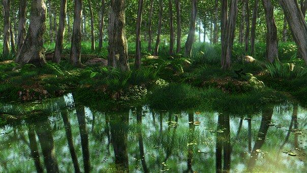 Wood, Nature, Water, Leaf, Tree, Landscape, Swamp