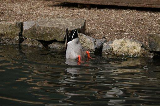 Waters, Bird, Animal World, River, Animal, Lake, Duck