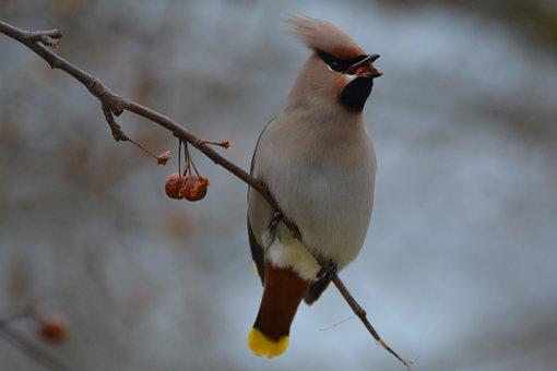 Birds, Animal Life, No Person, Nature, Outdoor, Animals