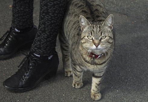 Tabby Cat, Feline, Cat Eyes, Eyes