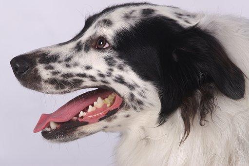 Animal, Mammal, Dog, Portrait, Cute, Close Up, Domestic