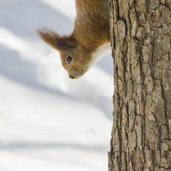 Living Nature, Nature, Wood, Mammals, Cute, Squirrel