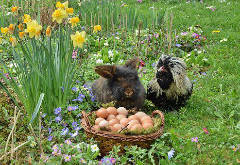 Easter, Easter Bunny, Chicken, Egg