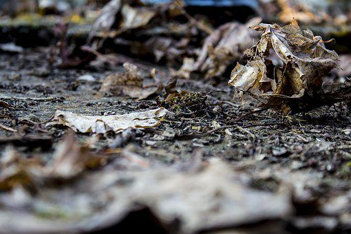 Nature, Wood, Environment, Dry, Autumn, Leaf, Close