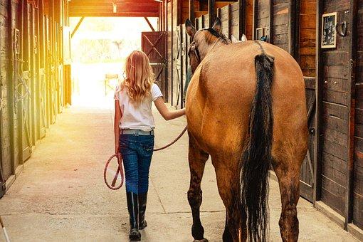 Horse, Horses, Stables, Farm, Ranch, Mare, Equestrian
