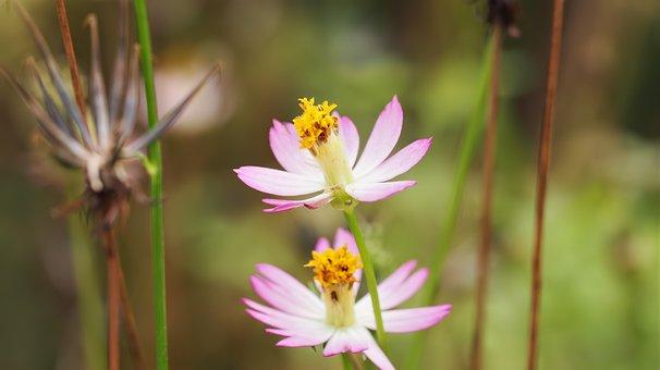 Nature, Flower, Flora, Summer, Outdoors, Blooming