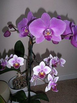 Orchids, Flower, Flora, Tropical, Petal, Nature