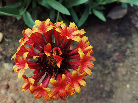 Nature, Flower, Color, Flora, Garden, Vibrant