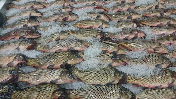 Fish, Nature, Catch, Shop, Ice, Product, Raw Fish, Food