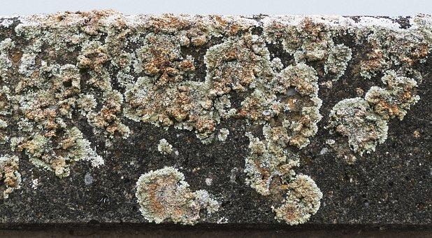 Weave, Concrete, Concrete Element, Fouling, Overgrown