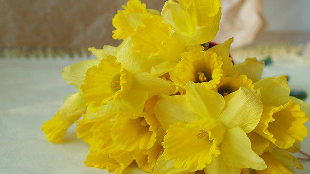 Narcissus, Nature, Daffodil, Easter, Festival, Gift