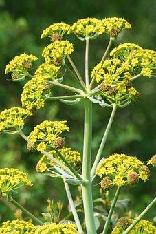 Flora, Nature, Flower, Leaf, Herb, Herbal Medicine