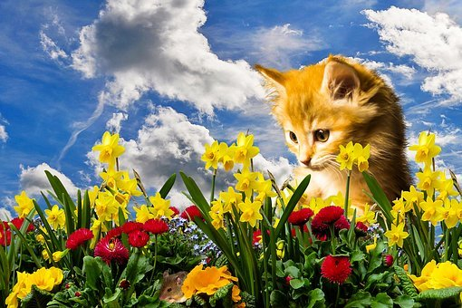 Flower, Nature, Spring, Cat, Mouse, Lurking, Hunt, Play