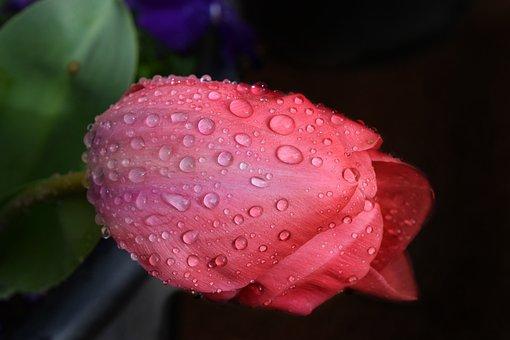 Flower, Nature, Flora, Leaf, Color, Garden, Closeup