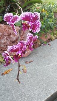 Nature, Flower, Flora, Beautiful, Leaf, Orchid
