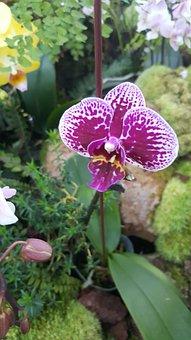 Nature, Flora, Flower, Garden, Leaf, Orchid, Spring