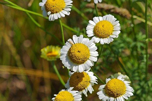Nature, Plant, Summer, Flower, Field, Meadow, Garden