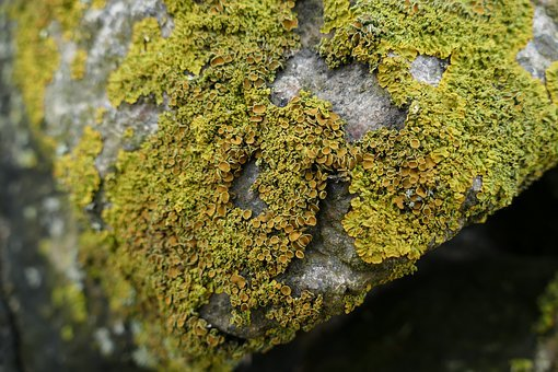 Nature, Lichen, Rock