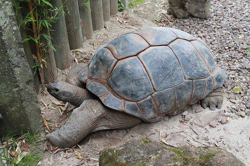 Turtle, Reptile, Nature, Slowly, Animal World