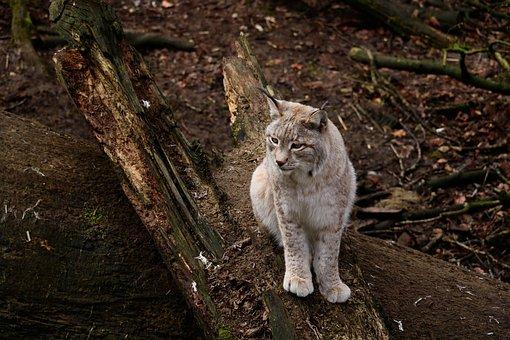 Nature, Animal World, Mammal, Wood, Animal, Wild
