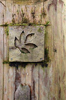 Wood, Leaf, Nature, Old, Moss, Transience