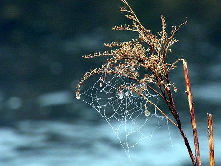 Canvas, Spider, Nature, Outdoor, Winter, River, Plant