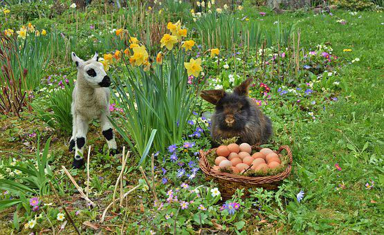 Rabbit, Easter, Easter Bunny, Passover