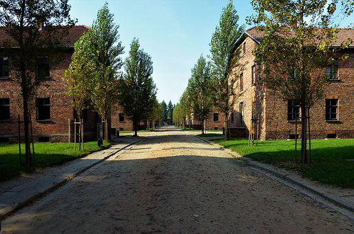 Tree, Architecture, Outdoor, Roadway, Street, Poland