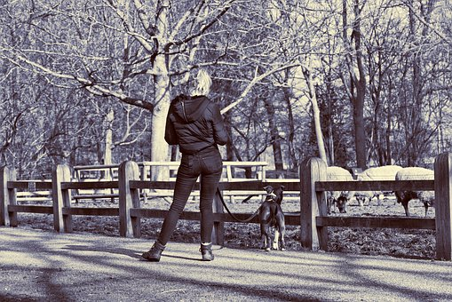 Woman, Person, People, Standing, Dog, Fence, Footpath