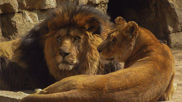 Mammals, Wildlife, Al, Animals