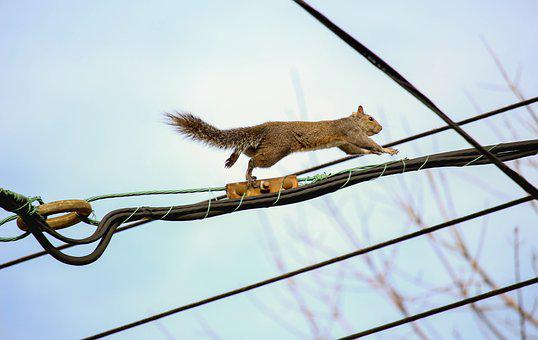 Animal, Nature, Tail, Mammal, Sky, Side View