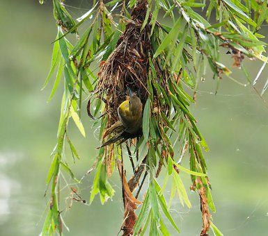 Nature, Outdoors, Leaf, Close-up, Nest, Building